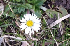 IMG_1244 (Small)