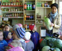 Żabki w sklepie owocowo – warzywnym