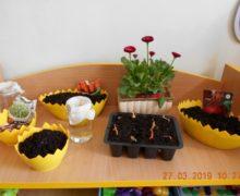 Pszczółki zakładają ogródek